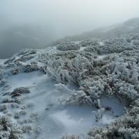 Corales de hielo en Ayllon.jpg