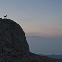 Rebeco en Picos de Europa